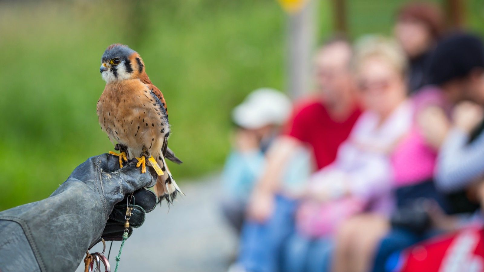 Things to Do at Tremblant - Falconry